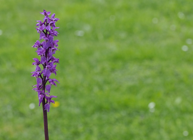 Orchid, Plant, Pointed Flower, Violet, Nature, Close