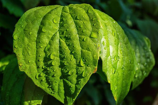 Leaf, Drip, Drop Of Water, Close, Rain, Green Plant