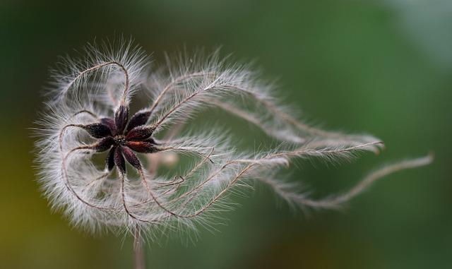 Seeds, Flying Seeds, Close, Winter, Filigree, Tender