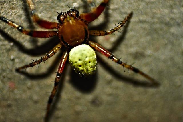 Pumpkin Spider, Spider, Close, Macro, Arachnid