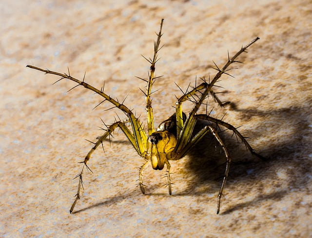 Small Spider, Spider, Arachnids, Close Up