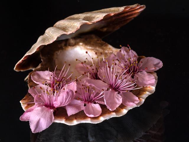 Still Life, Shell, Close Up, Blossom, Bloom