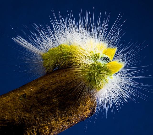 Caterpillar, Hairy, Prickly, Close Up, Book Track Walk