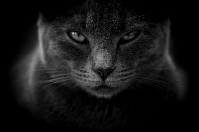 Cat, Moody, Angry, Close Up, Black And White, Cat Eyes