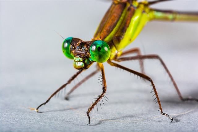 Dragonfly, Insect, Close Up, Eye, Green