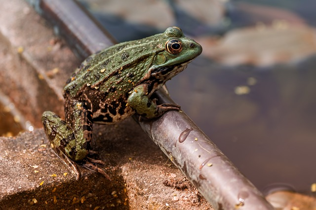 Nature, Frog, Green, Close Up, Macro