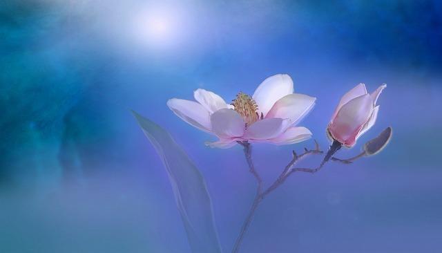 Flower, Summer, Plant, Garden, Close Up, Artistically