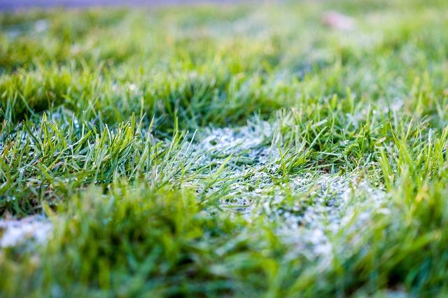 Grass, Green, Close Up, Green Grass, Nature
