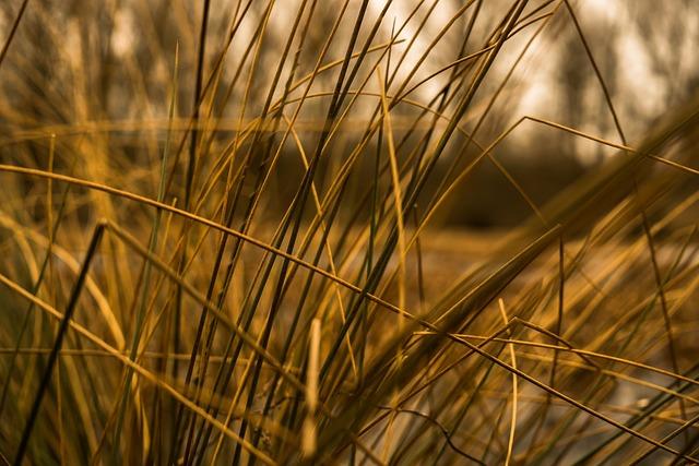 Grasses, Halme, Stalk, Close Up, Blades Of Grass