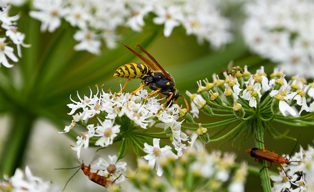 Insects, Hornet, Wasp, Sting, Prickly, Animal, Close Up