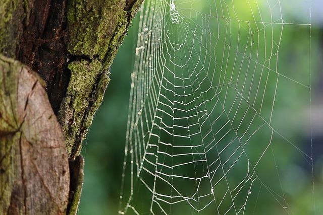 Spider Webs, Cobweb, Network, Cobwebs, Close Up, Case