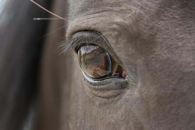 Horse, Eye, Close Up, Animal, Ride, Mammal, Rap, Black