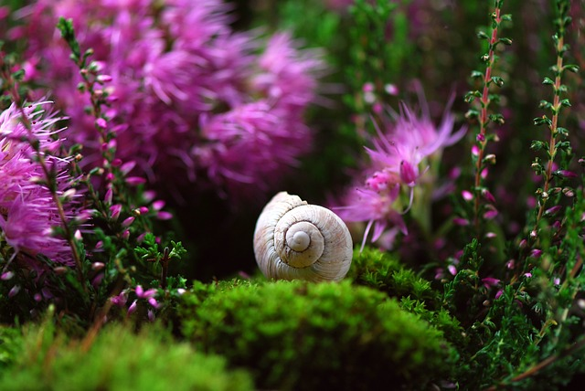 Snail, Shell, Mollusk, Close Up, Snail Shell, Slowly