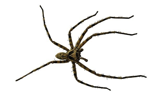 Spider, Close Up, Isolated