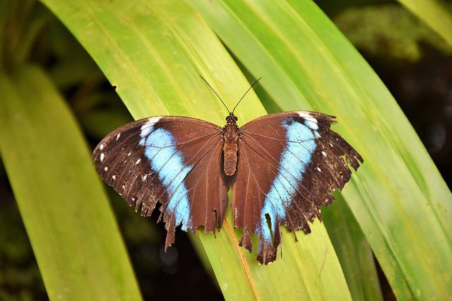 Butterfly, Insect, Wing, Nature, Close Up, Flying