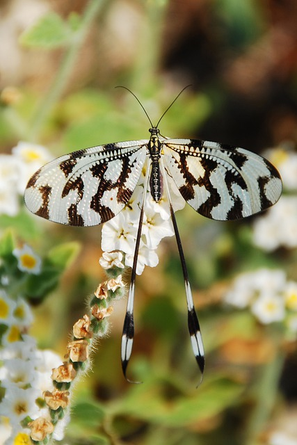 Butterfly, Insect, Black, White, Pattern, Summer, Close