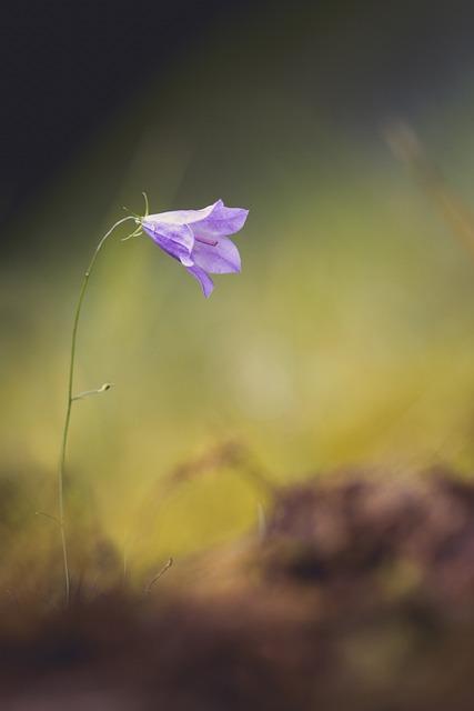 Flower, Nature, Bellflower, Spring, Wild Flower, Close