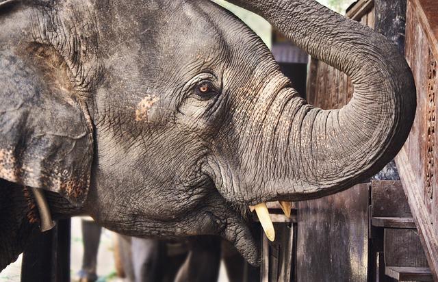 Animal, Close-up, Elephant, Elephant Trunk