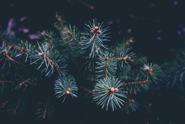 Branch, Celebration, Christmas, Close-up, Color