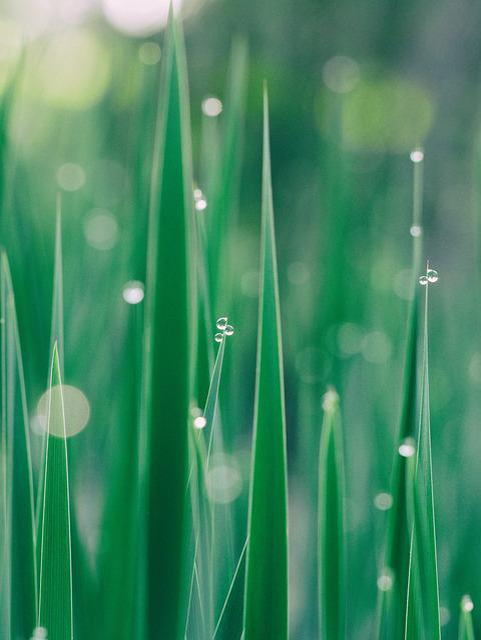 Blur, Clean, Close-up, Dew, Drop, Droplet, Drops, Focus