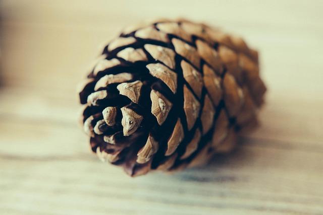 Blur, Close-up, Focus, Pine Cone