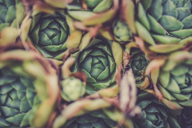 Artichoke, Blur, Close-up, Focus, Food, Grow, Leaf