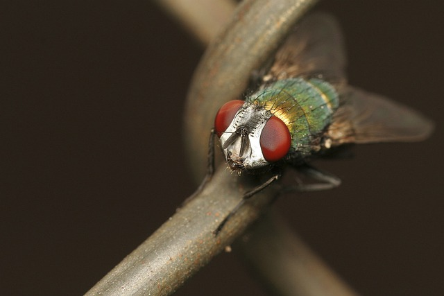 Colorful, Insect, Bug, Nature, Animal, Close-up, Macro