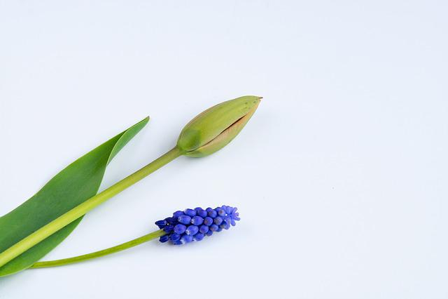 Flowers, Tulip, Closed, Closed Flower, Spring Flower