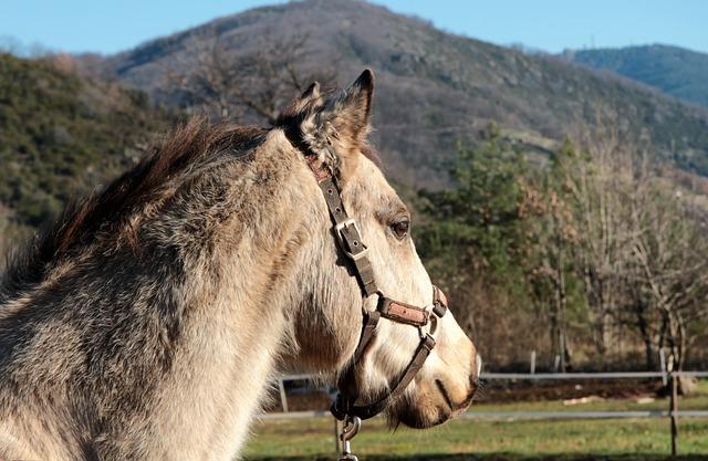 Nature, Animal, Pony, Animals, Closed Nature, Farm