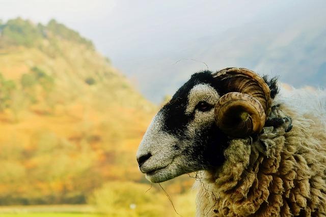 Ram, Sheep, Closeup, Macro, Animal, Wildlife, Landscape