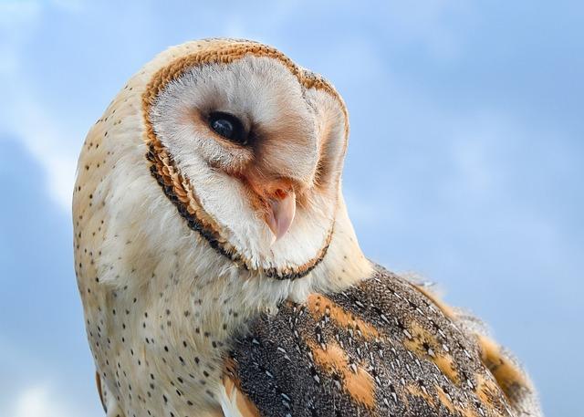 Owl, Bird, Raptor, Animal, Fauna, Closeup, Blue Animals