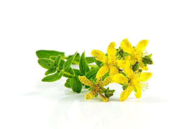 Herb St John's Wort, Flower, Closeup, Flora, Floral
