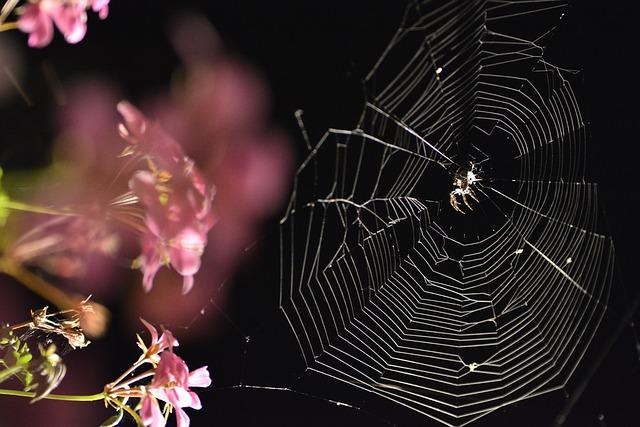 Spider, Scary, Black, Flowers, Dark, Closeup, Autumn