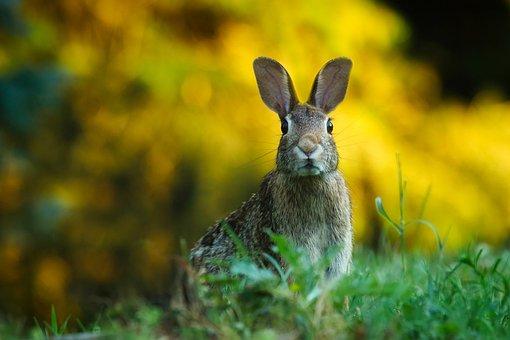 Rabbit, Hare, Animal, Wildlife, Cute, Macro, Closeup