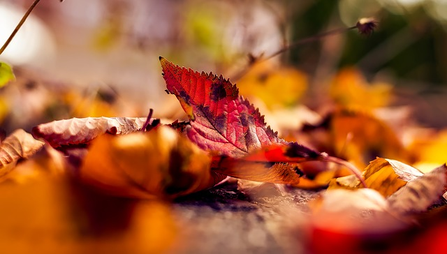 Autumn, Fall, Leaves, Leaf, Macro, Closeup
