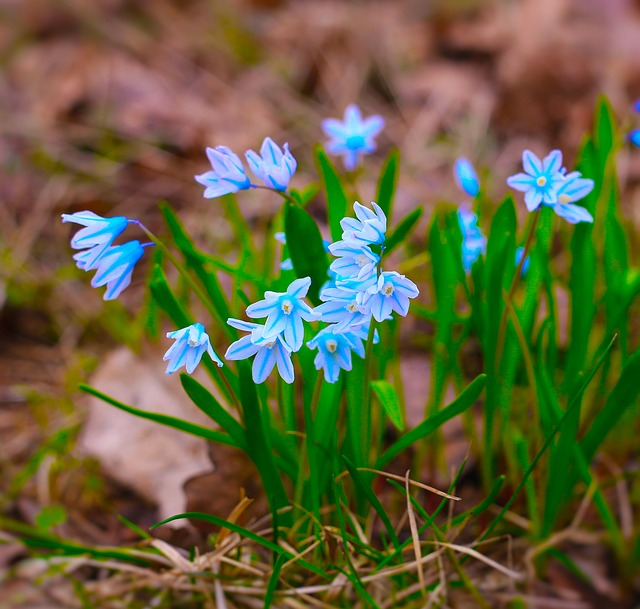 Primroses, Spring, Flower, Garden, Closeup