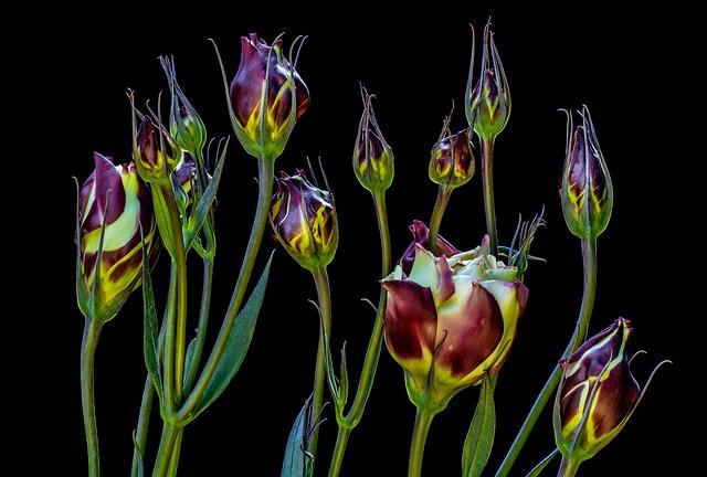 Flowers, Closeup, Beauty, The Delicacy, Plant, Nature