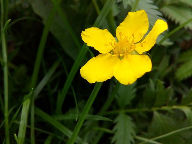 Free photo closeup yellow flowers flower plant wild herbs max pixel mightylinksfo