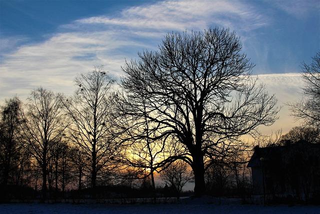 Nature, Tree, Panoramic, Dawn, Sunset, Himmel, Cloud
