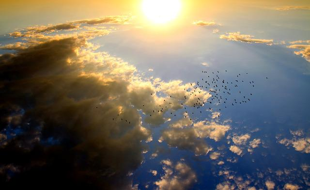 Sunset, Birds, Cloud, Sun, Sky, Red