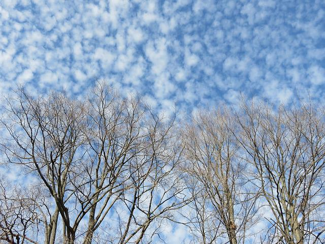 Clouds, Branches, Mackerel Sky, Trees, Winter, Bare