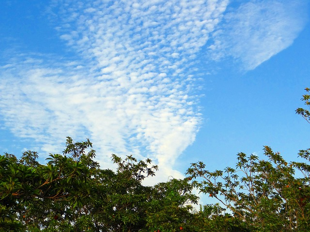 Fruit Garden, Chikoo, Chikoo Trees, Clouds, Altocumulus