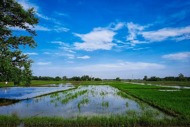 Blue Sky, Clouds, Tree, Farm, Rice Plants