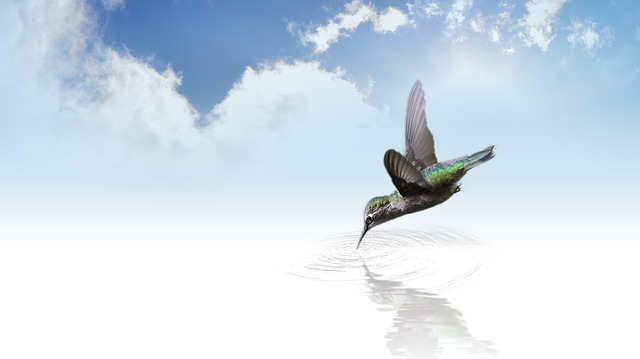 Hummingbird, Bird, Fly, Wing, Flutter, Clouds, Sky