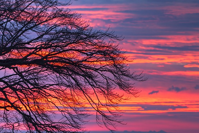 Morgenrot, Clouds, Tree, Sunrise, Sky, Morgenstimmung