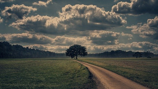 Away, Nature, Landscape, Sky, Field, Clouds, Tree