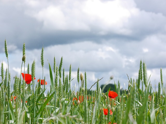 Clouds, Poppy, Meadow