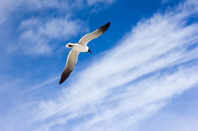 Animal, Bird, Blue, Clouds, Flying, Sky