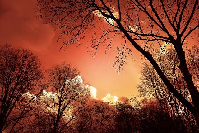 Tree, Silhouette, Sunset, Sky, Clouds, Bare Tree