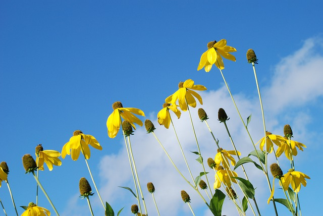 Flower, Yellow, Sunlight, Sky, Clouds, Leaf, Plant